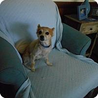 Adopt A Pet :: Miranda -Adopted! - Kannapolis, NC