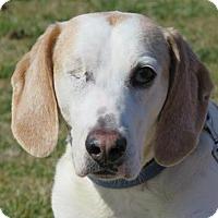 Adopt A Pet :: Dreamboat - Richmond, VA