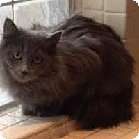 Adopt A Pet :: Mystery - West Des Moines, IA