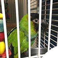 Adopt A Pet :: Petey - Punta Gorda, FL