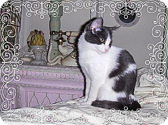 Domestic Mediumhair Cat for adoption in Los Angeles, California - Kalaya