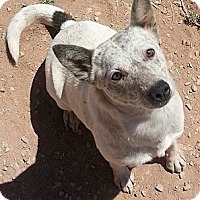 Adopt A Pet :: Lady - Alamogordo, NM