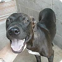 Adopt A Pet :: Lil' Bit - dawson, GA