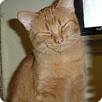 Adopt A Pet :: Freckles - Lake Charles, LA