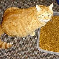 Adopt A Pet :: Morris - Saint Albans, WV