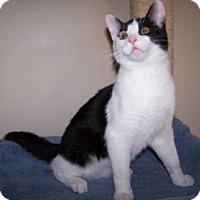 Adopt A Pet :: K-Kostendt1-Molesley - Colorado Springs, CO