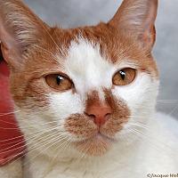 Adopt A Pet :: Julius - St Louis, MO