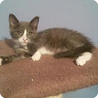 Adopt A Pet :: Shaggy - McDonough, GA