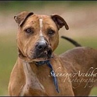 Adopt A Pet :: Sarah - Dallas, GA