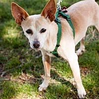 Adopt A Pet :: Ben - Tucson, AZ
