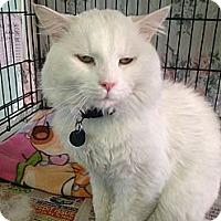 Adopt A Pet :: Mr. Pusserkins - Cleveland, OH