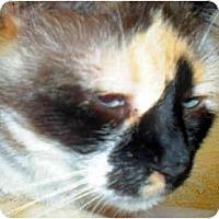 Adopt A Pet :: Purrecious - Summerville, SC
