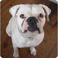 Adopt A Pet :: Buster - Thomasville, GA