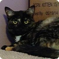 Adopt A Pet :: Klesko - Monroe, GA