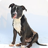 Adopt A Pet :: King - Los Angeles, CA
