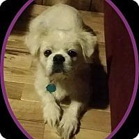 Adopt A Pet :: Ava (N. Tazewell, VA) - Portland, ME