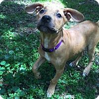 Adopt A Pet :: Princess - Tampa, FL