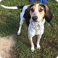 Adopt A Pet :: Lima Bean - Avon, OH