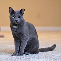 Adopt A Pet :: Romulus - St. Louis, MO