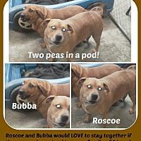 Adopt A Pet :: ROSCOE & BUBBA - Malvern, AR