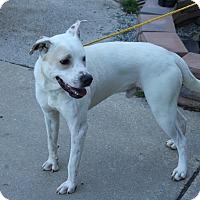 Adopt A Pet :: Blackburn - Greensboro, NC