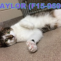 Adopt A Pet :: Taylor - Tiffin, OH