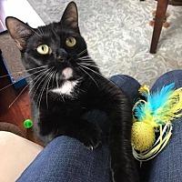 Adopt A Pet :: Evie - Pensacola, FL
