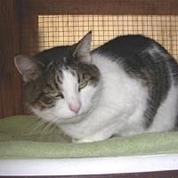Adopt A Pet :: Oreo - Calimesa, CA
