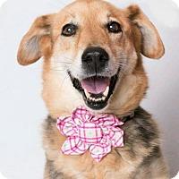 Adopt A Pet :: Tellus - Kenner, LA