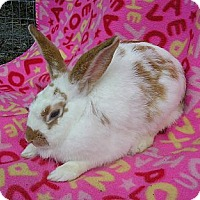 Adopt A Pet :: Mango - Williston, FL