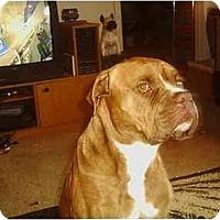 Adopt A Pet :: Ceazar - Flint (Serving North and East TX), TX