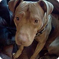 Adopt A Pet :: Giacomo - Hastings, NY