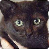 Adopt A Pet :: Sabrina - Kensington, MD