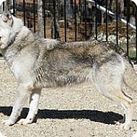 Adopt A Pet :: Neima - Ashland, OR