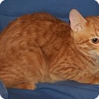 Adopt A Pet :: K-Kameron2-Owen - Colorado Springs, CO