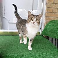 Adopt A Pet :: zz 'Lucky Luigi' courtesy listing - Cincinnati, OH
