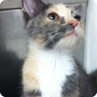 Adopt A Pet :: Yardley - Trevose, PA