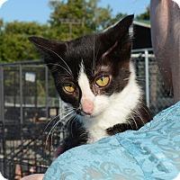 Adopt A Pet :: Tux - Hopkinsville, KY