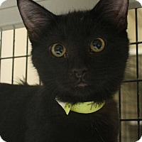 Adopt A Pet :: Thunder - Fort Madison, IA