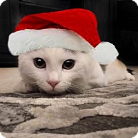 Adopt A Pet :: Romeo162112 - Atlanta, GA