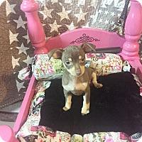 Adopt A Pet :: George - Brea, CA