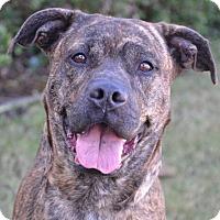Adopt A Pet :: Nonna - Englewood, FL