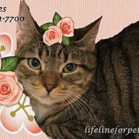 Adopt A Pet :: Pretty PEBBLES - Monrovia, CA