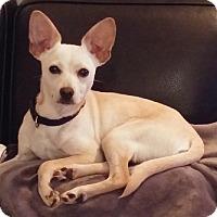 Adopt A Pet :: Lil Bit aka Billy - Hamilton, ON