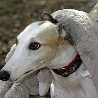 Adopt A Pet :: Loveshack - Longwood, FL