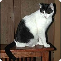 Adopt A Pet :: Cecil (with Albert) - Portland, OR