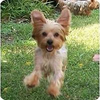 Adopt A Pet :: Dakota - Gulfport, FL