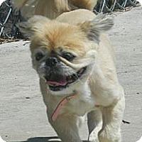 Adopt A Pet :: Bitsy-VA - Suffolk, VA