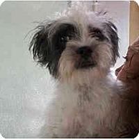 Adopt A Pet :: Max - Johnsburg, IL