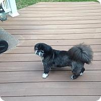 Adopt A Pet :: Gizzie - Richmond, VA
